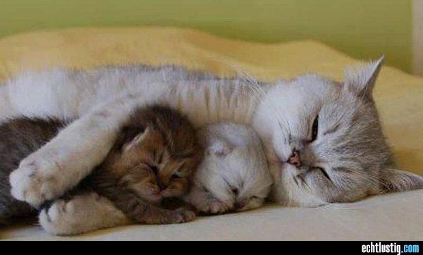 40 katzen-beim-schlafen